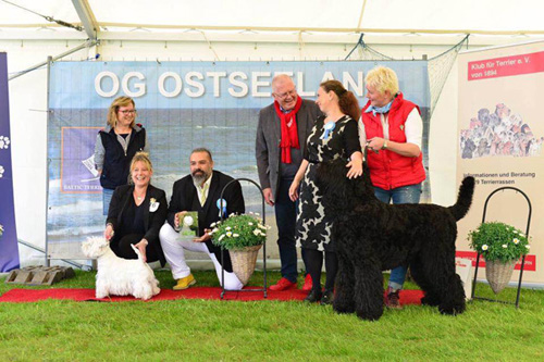 Baltic Terrier Show 2016 :: Bettyhill's Westies