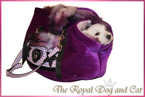Fotoshooting The Royal Dog and Cat :: Bettyhill's Westies