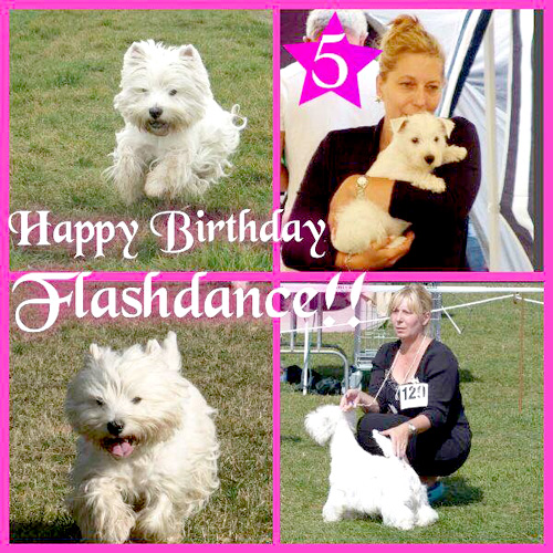 Happy Birthday Flashi :: Bettyhill's Westies