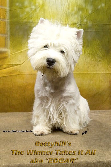 Edar in Bremen :: Bettyhills Westies