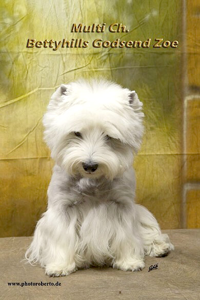 Zoe in Bremen :: Bettyhills Westies