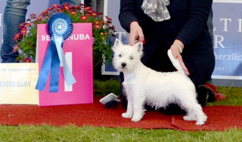 Baltic Terrier Show 2017