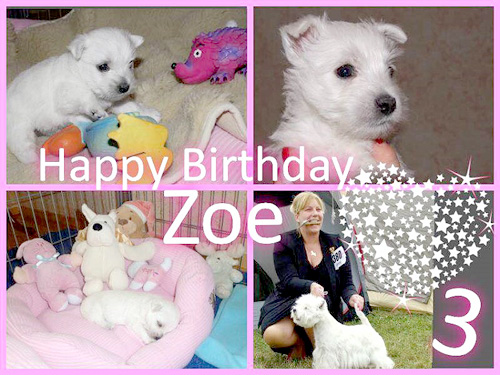 Happy Birthday Zoe :: Bettyhill's Westies